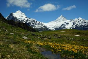 Breathe 2016 Alps Stream